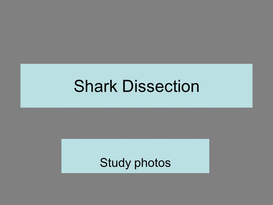 Shark Structures 1.Rostrum 2. Eye 3. Spiracle 4. Lateral Line 5.