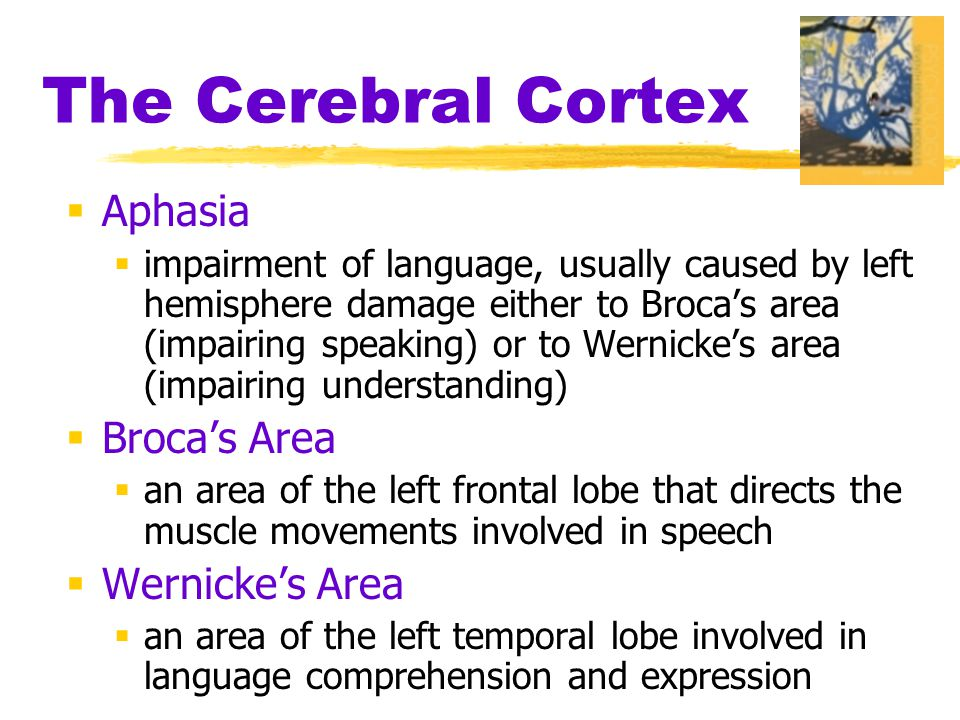 The Cerebral Cortex  Aphasia  impairment of language, usually caused by left hemisphere damage either to Broca's area (impairing speaking) or to Wernicke's area (impairing understanding)  Broca's Area  an area of the left frontal lobe that directs the muscle movements involved in speech  Wernicke's Area  an area of the left temporal lobe involved in language comprehension and expression