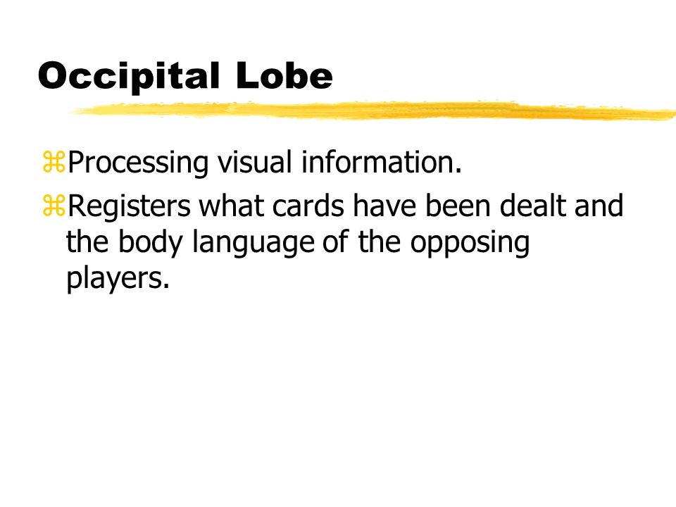 Occipital Lobe zProcessing visual information.