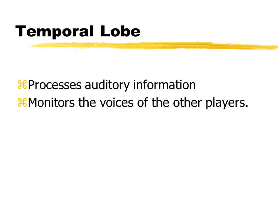Temporal Lobe zProcesses auditory information zMonitors the voices of the other players.