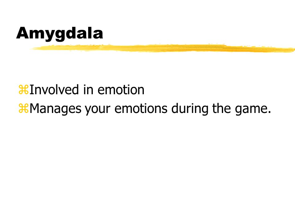 Amygdala zInvolved in emotion zManages your emotions during the game.