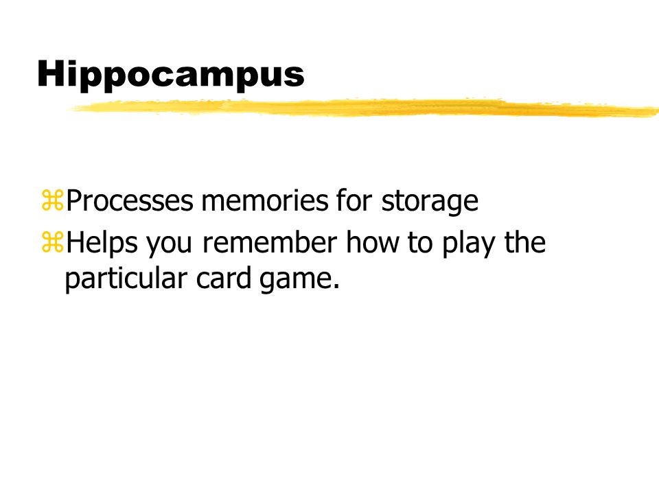 Hippocampus zProcesses memories for storage zHelps you remember how to play the particular card game.