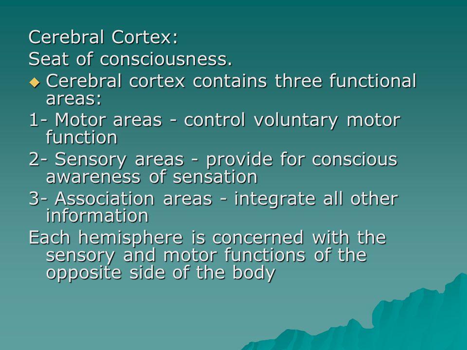 Cerebral Cortex: Seat of consciousness.  Cerebral cortex contains three functional areas: 1- Motor areas - control voluntary motor function 2- Sensor