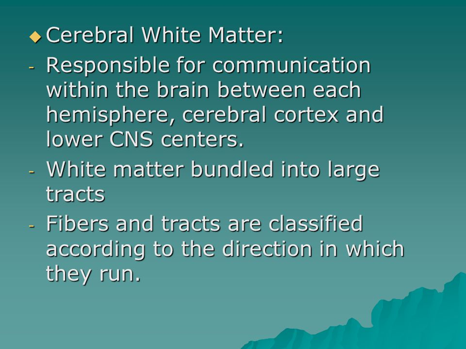  Cerebral White Matter: - Responsible for communication within the brain between each hemisphere, cerebral cortex and lower CNS centers.