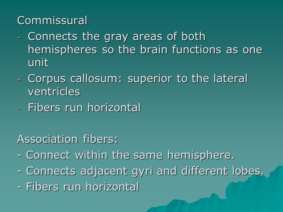 Commissural - Connects the gray areas of both hemispheres so the brain functions as one unit - Corpus callosum: superior to the lateral ventricles - Fibers run horizontal Association fibers: - Connect within the same hemisphere.
