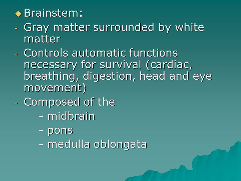  Brainstem: - Gray matter surrounded by white matter - Controls automatic functions necessary for survival (cardiac, breathing, digestion, head and eye movement) - Composed of the - midbrain - pons - medulla oblongata