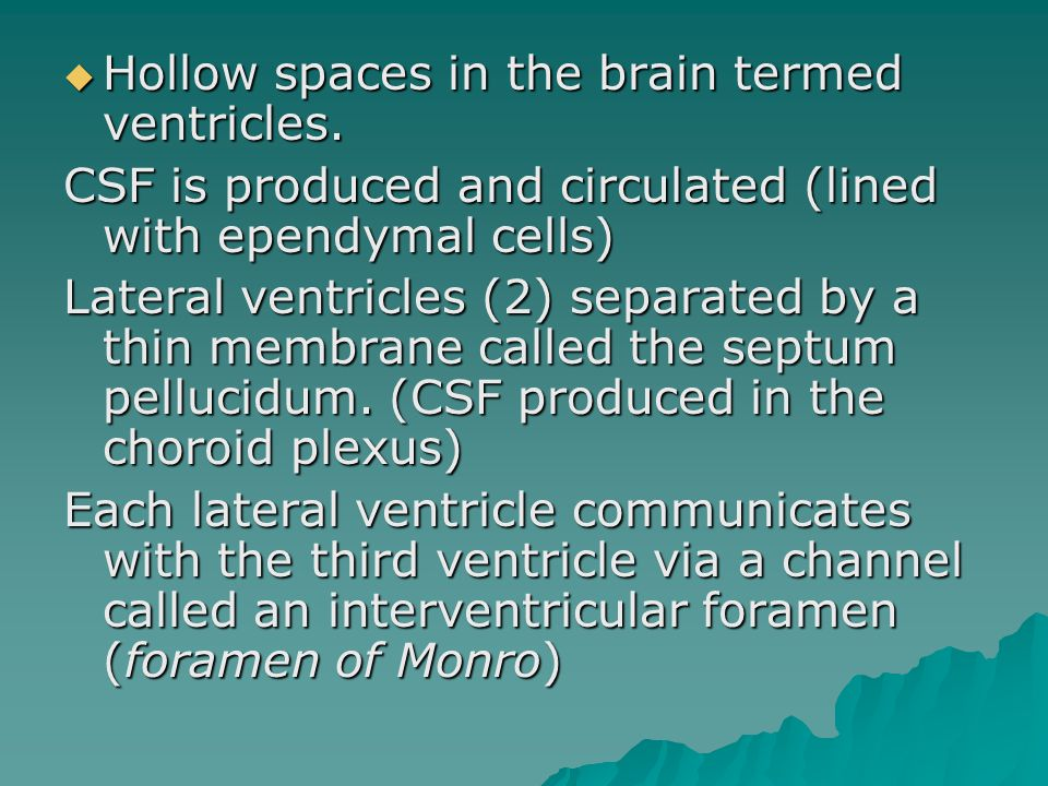  Hollow spaces in the brain termed ventricles.