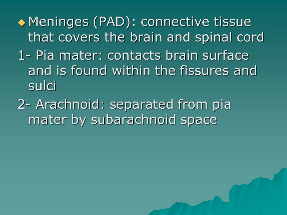  Meninges (PAD): connective tissue that covers the brain and spinal cord 1- Pia mater: contacts brain surface and is found within the fissures and sulci 2- Arachnoid: separated from pia mater by subarachnoid space