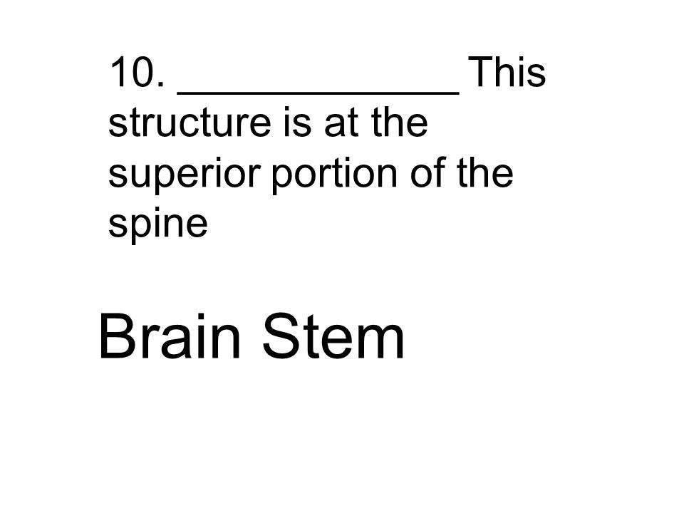 10. ____________ This structure is at the superior portion of the spine Brain Stem