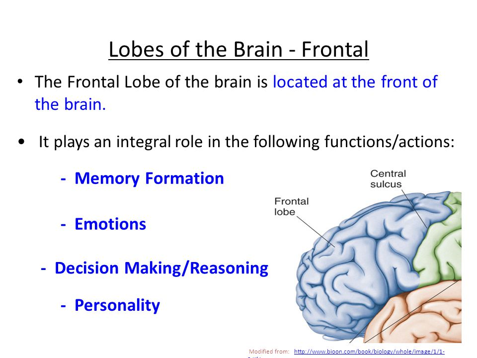 5. ____________ This structure contains the pons and medulla oblongata Brain Stem