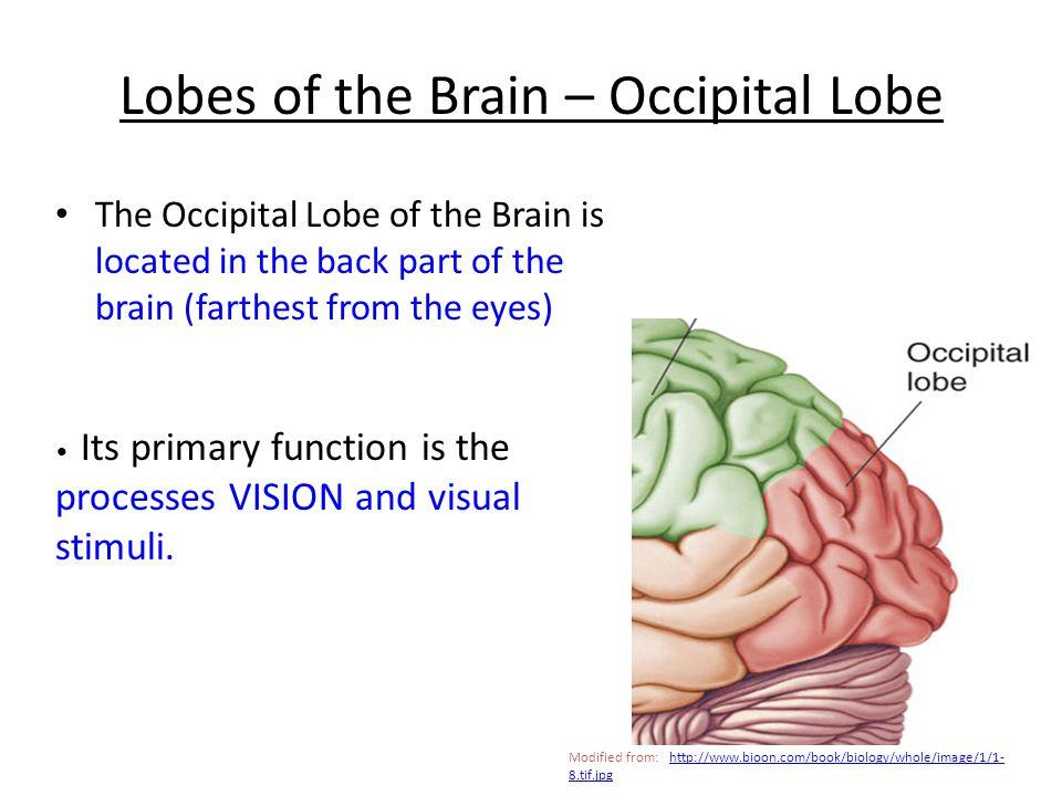 9. ____________ This lobe processes sensory information and cognition Parietal