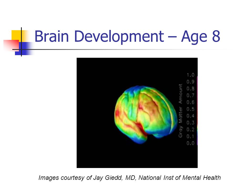 Brain Development – Age 8 Images courtesy of Jay Giedd, MD, National Inst of Mental Health