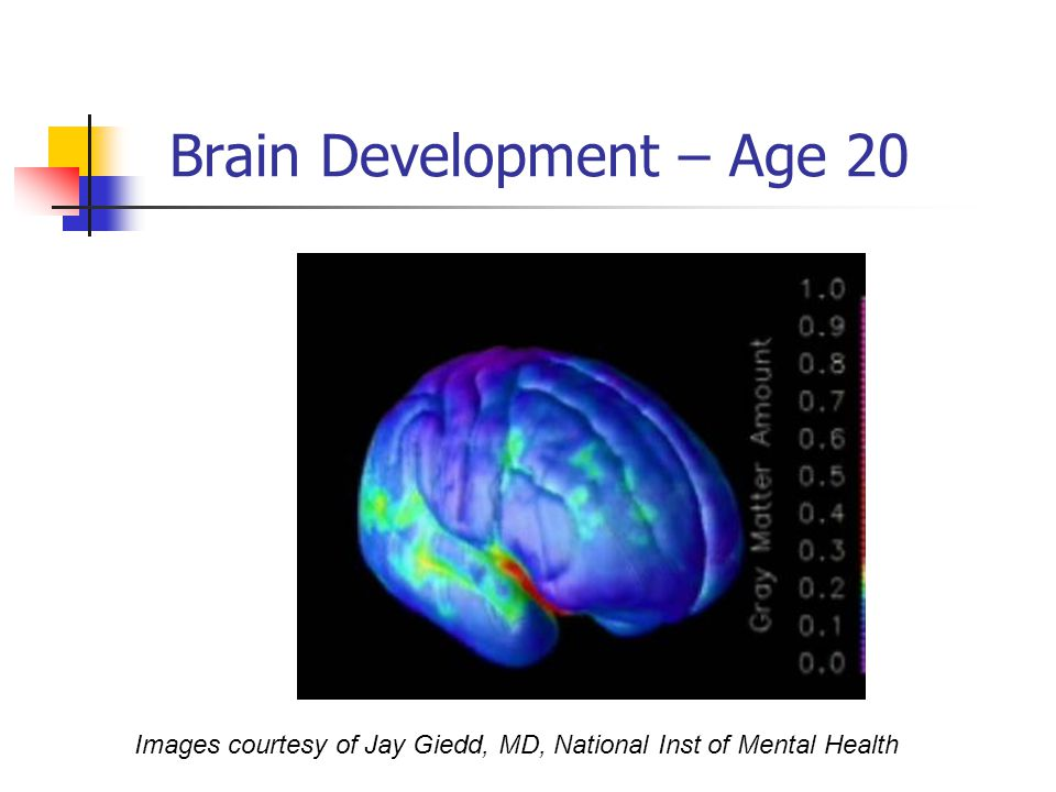 Brain Development – Age 20 Images courtesy of Jay Giedd, MD, National Inst of Mental Health