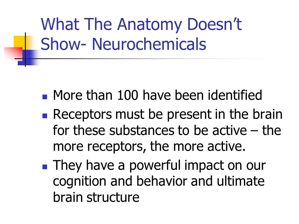 What The Anatomy Doesn't Show- Neurochemicals More than 100 have been identified Receptors must be present in the brain for these substances to be active – the more receptors, the more active.