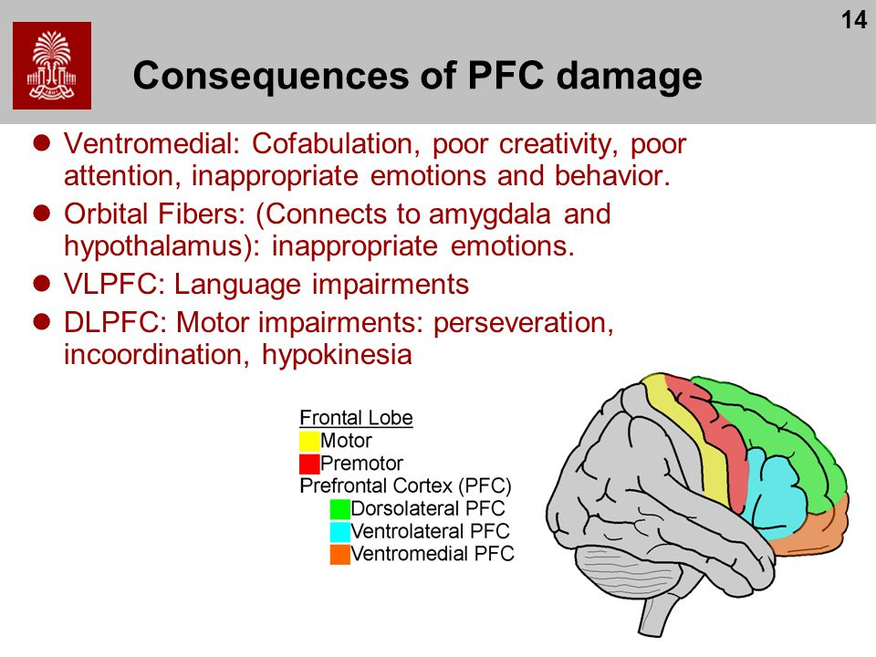 14 Consequences of PFC damage Ventromedial: Cofabulation, poor creativity, poor attention, inappropriate emotions and behavior.
