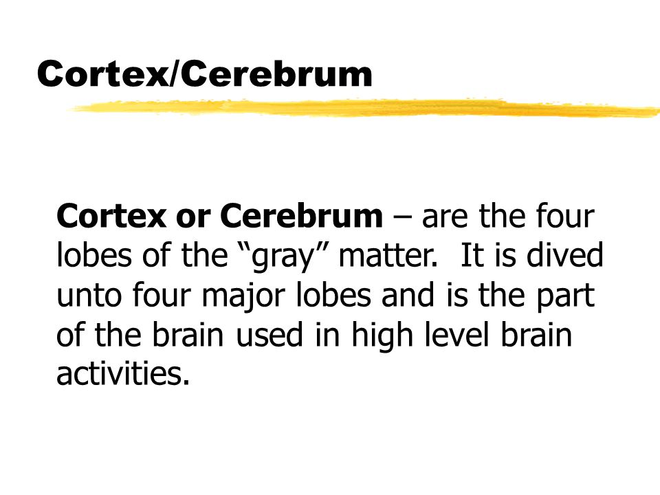 """Cortex/Cerebrum Cortex or Cerebrum – are the four lobes of the """"gray"""" matter. It is dived unto four major lobes and is the part of the brain used in h"""