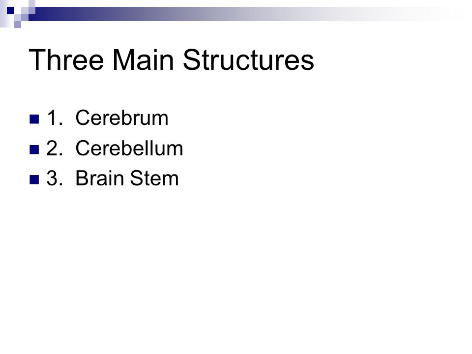 Three Main Structures 1. Cerebrum 2. Cerebellum 3. Brain Stem