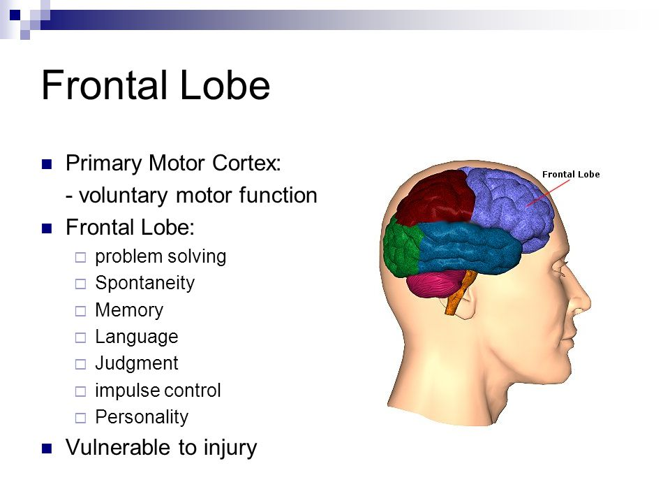 Frontal Lobe Primary Motor Cortex: - voluntary motor function Frontal Lobe:  problem solving  Spontaneity  Memory  Language  Judgment  impulse c