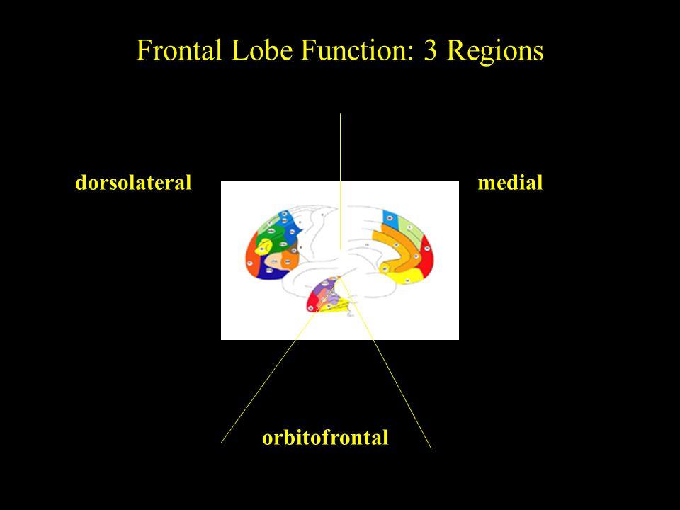 dorsolateralmedial orbitofrontal Frontal Lobe Function: 3 Regions