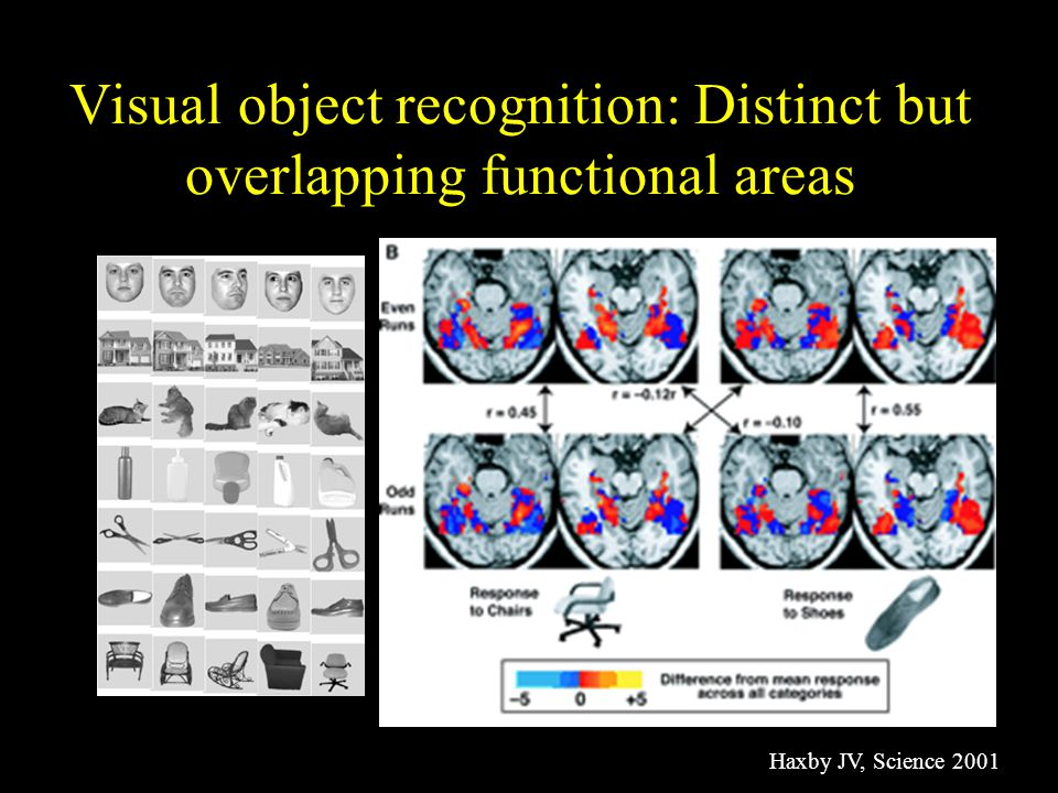 Visual object recognition: Distinct but overlapping functional areas Haxby JV, Science 2001