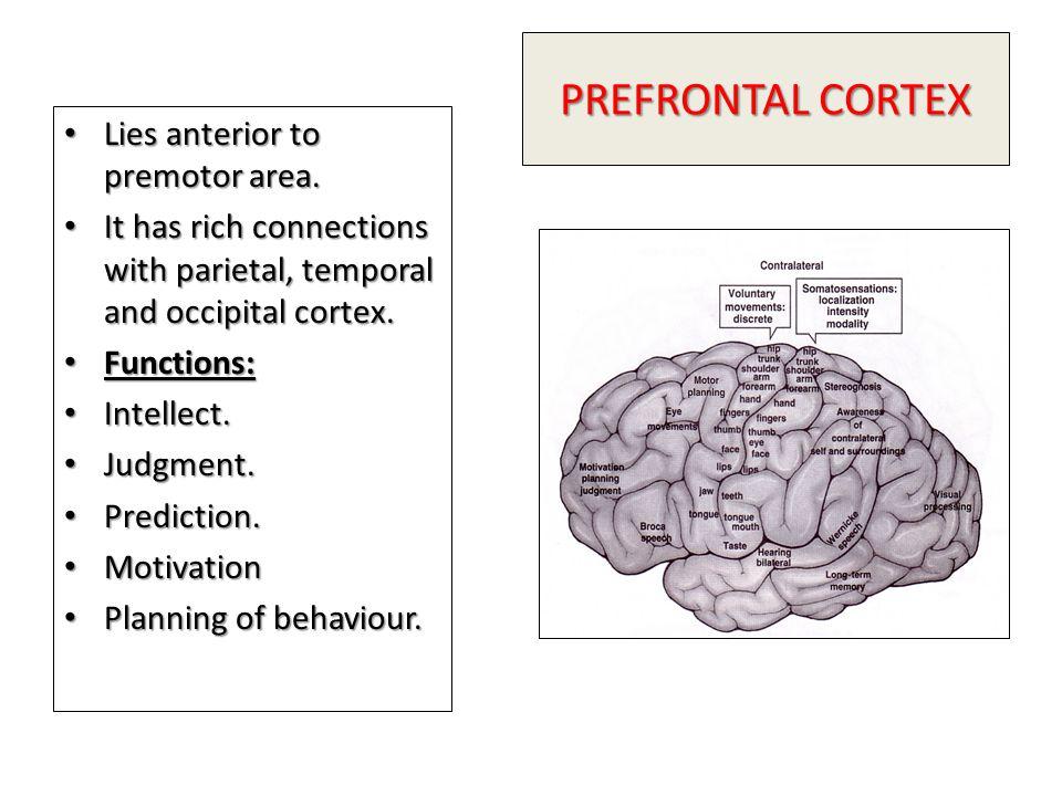 PREFRONTAL CORTEX Lies anterior to premotor area.Lies anterior to premotor area.