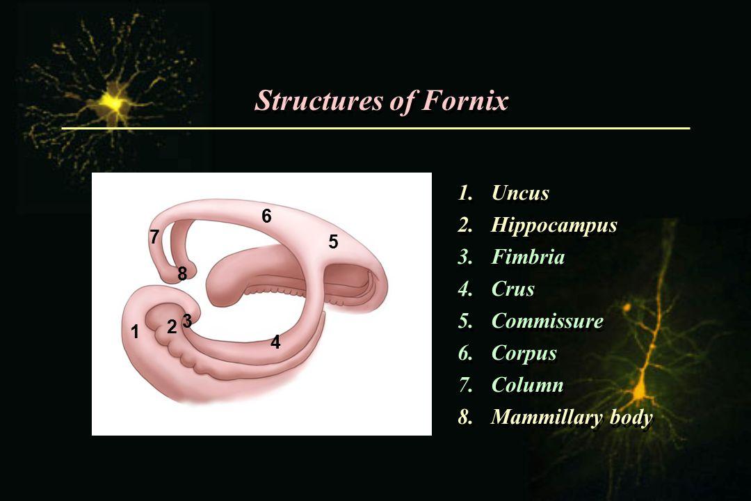 Structures of Fornix 1.Uncus 2.Hippocampus 3.Fimbria 4.Crus 5.Commissure 6.Corpus 7.Column 8.Mammillary body 1.Uncus 2.Hippocampus 3.Fimbria 4.Crus 5.