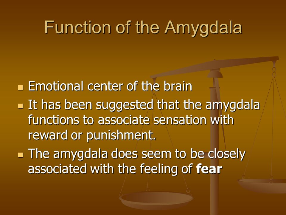 Function of the Amygdala Emotional center of the brain Emotional center of the brain It has been suggested that the amygdala functions to associate se