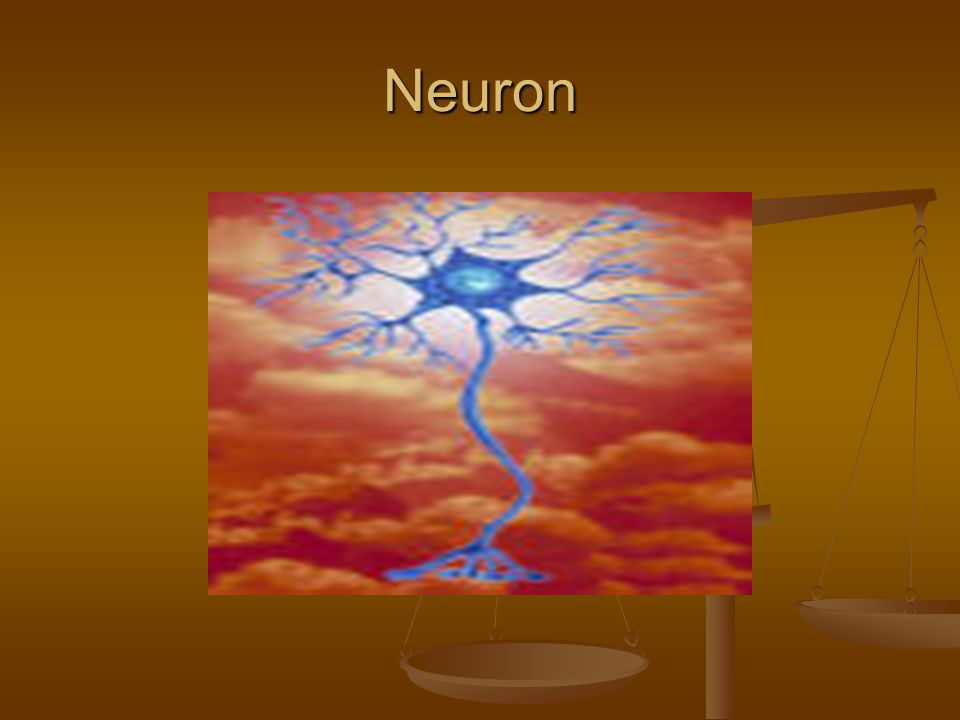 Stages of brain development The infant is born with an overproduction of neuron, much more than the adult brain.