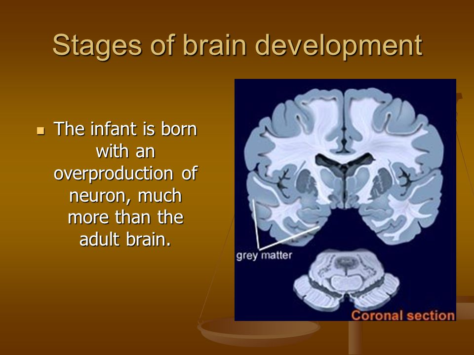 Neural connections, however, are not established during birth.