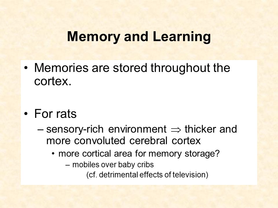 Memory and Learning Memories are stored throughout the cortex.