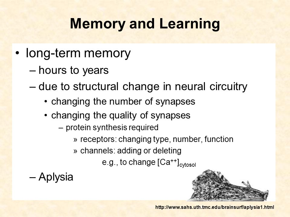 Memory and Learning long-term memory –hours to years –due to structural change in neural circuitry changing the number of synapses changing the qualit