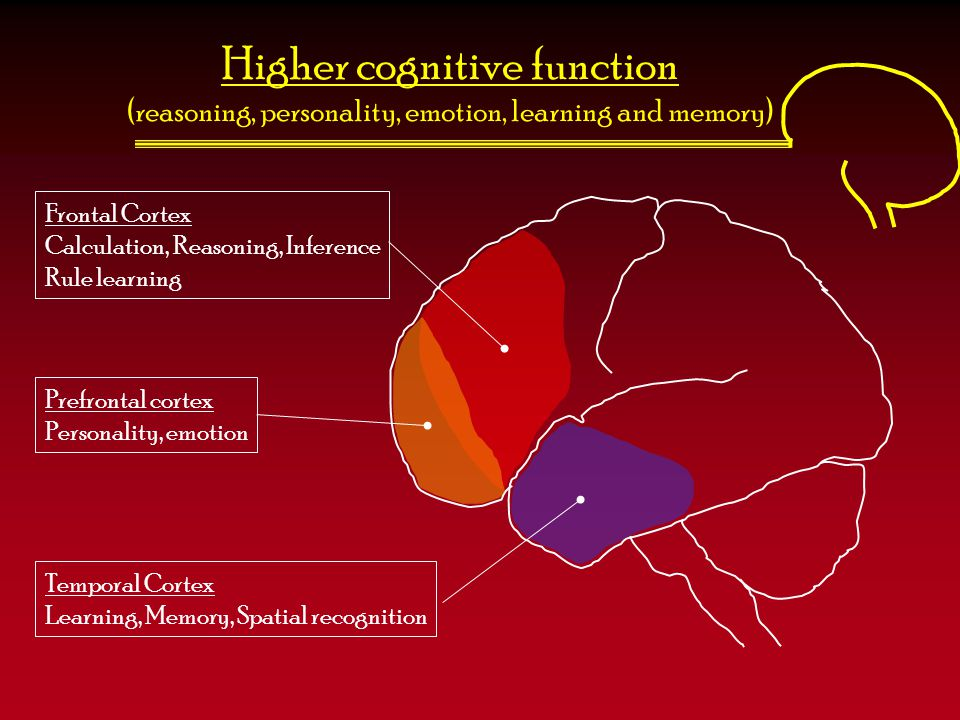 Higher cognitive function (reasoning, personality, emotion, learning and memory) Frontal Cortex Calculation, Reasoning, Inference Rule learning Prefro