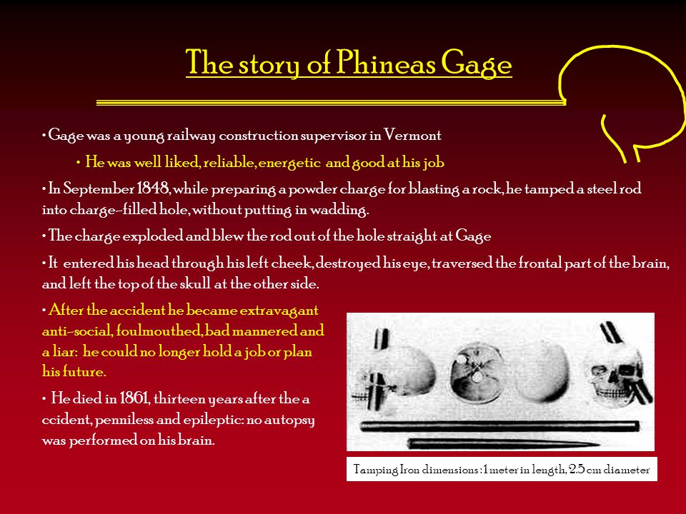 The story of Phineas Gage Gage was a young railway construction supervisor in Vermont He was well liked, reliable, energetic and good at his job In Se