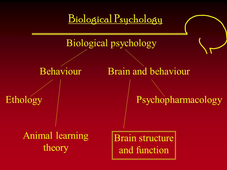 Cortical areas controlling language We will explore language in more detail in lecture 6 Broca's area Primary motor cortex Primary auditory cortex Primary visual cortex Arcuate fasciculusWernike's area