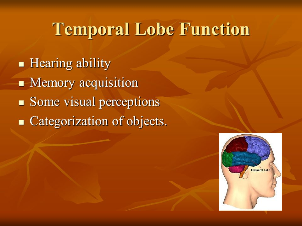 Temporal Lobe Function Hearing ability Hearing ability Memory acquisition Memory acquisition Some visual perceptions Some visual perceptions Categorization of objects.