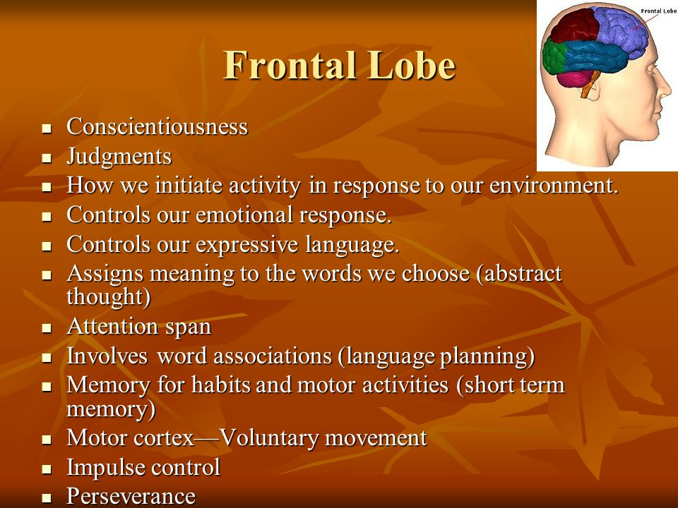 Frontal Lobe Conscientiousness Conscientiousness Judgments Judgments How we initiate activity in response to our environment.