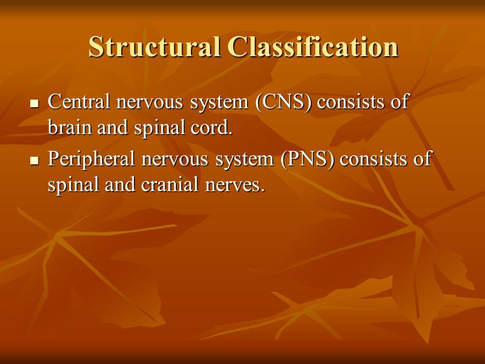 Brain stem Midbrain,pons,and medulla oblongata Midbrain,pons,and medulla oblongata