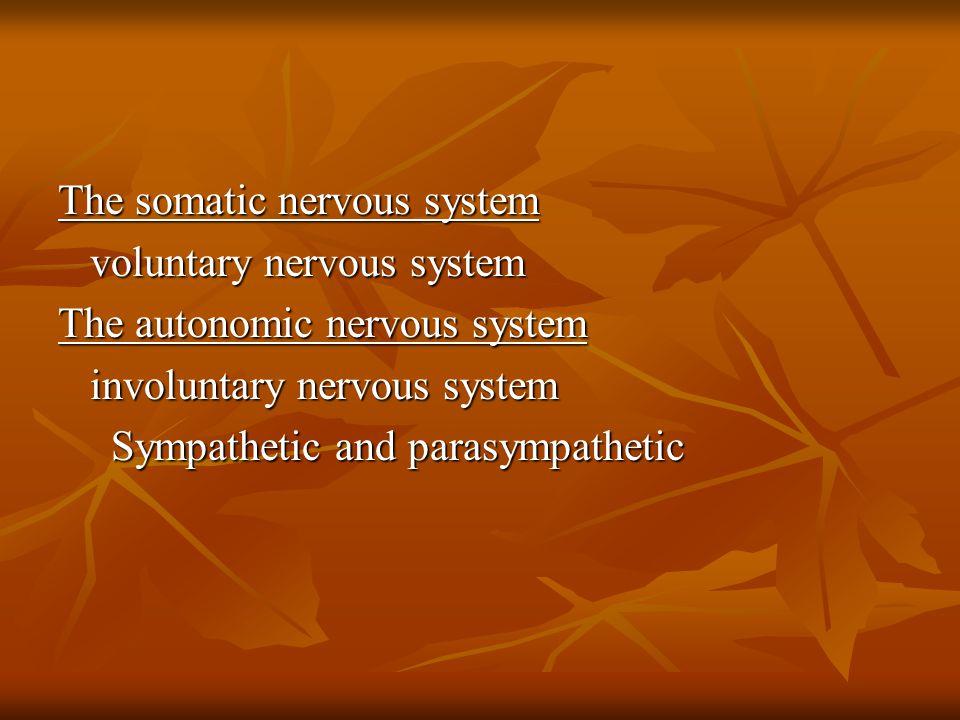Functional anatomy of the brain Cerebral hemispheres.