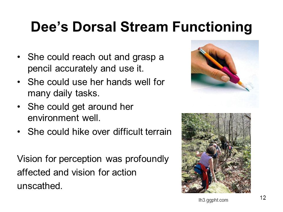12 Dee's Dorsal Stream Functioning She could reach out and grasp a pencil accurately and use it. She could use her hands well for many daily tasks. Sh