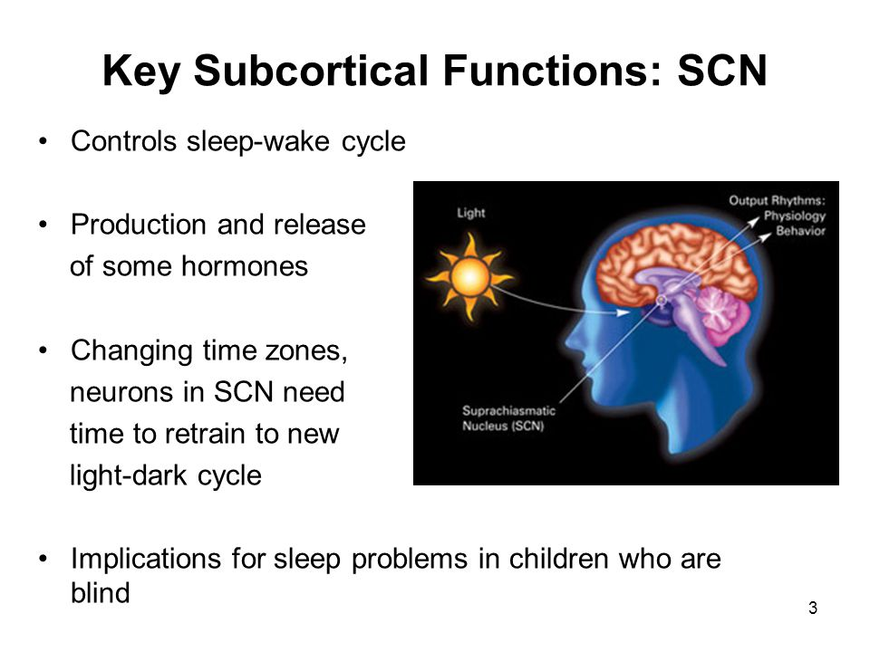 Key Subcortical Functions: SCN Controls sleep-wake cycle Production and release of some hormones Changing time zones, neurons in SCN need time to retr