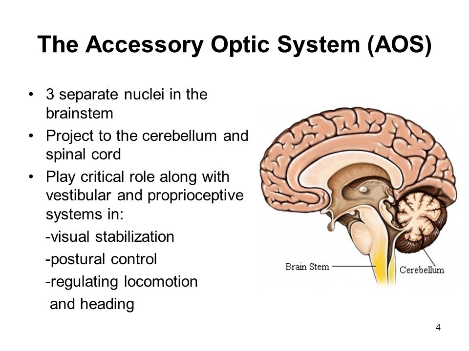 Other Pathway Destinations Superior Colliculus: Initiation and control of orienting movements of eyes, head and body to things in the peripheral fields and fixation on them Some control pupil size Some in brainstem to control eye muscles Some in spinal column to control muscles in neck, trunk and limbs 5 Improved head and trunk control also often leads to improved visual functioning