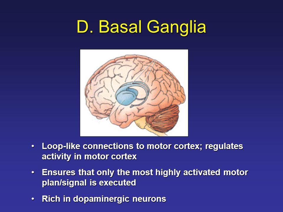 D. Basal Ganglia Loop-like connections to motor cortex; regulates activity in motor cortexLoop-like connections to motor cortex; regulates activity in