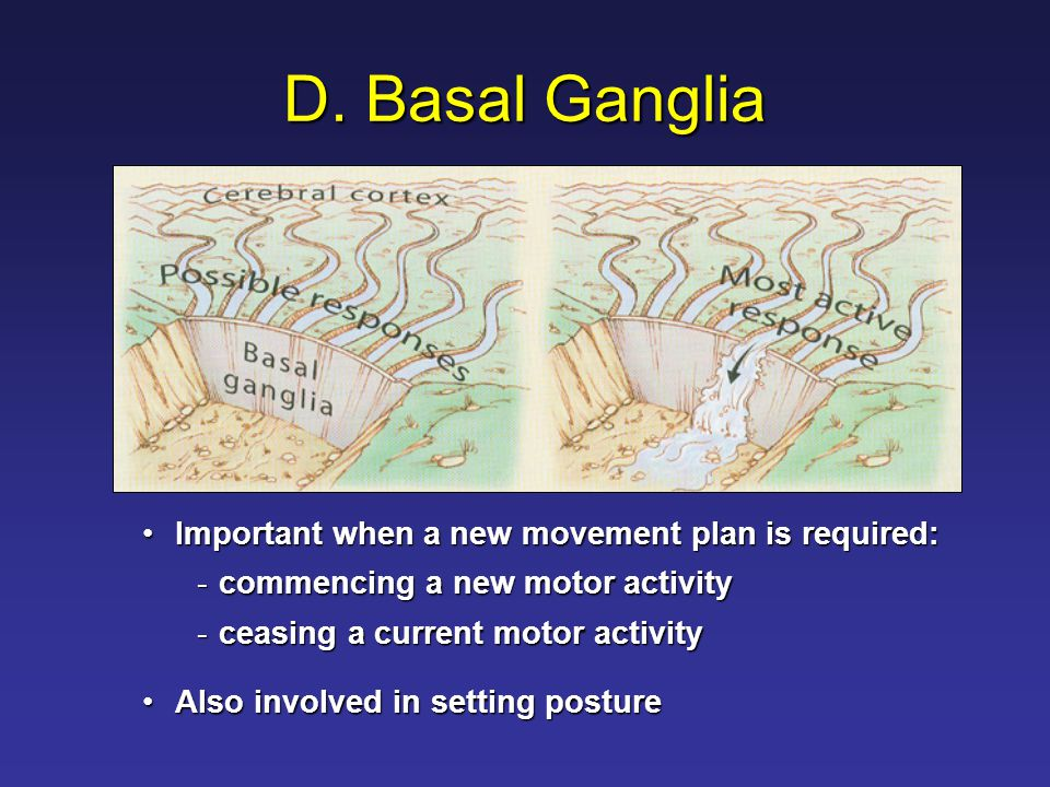 D. Basal Ganglia Important when a new movement plan is required:Important when a new movement plan is required: -commencing a new motor activity -ceas