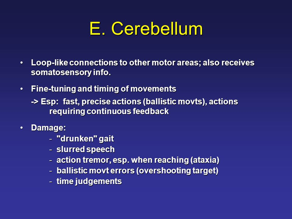 E. Cerebellum Loop-like connections to other motor areas; also receives somatosensory info.Loop-like connections to other motor areas; also receives s
