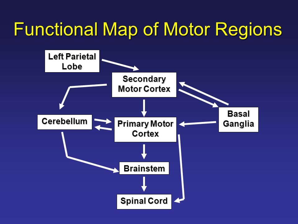 Functional Map of Motor Regions Secondary Motor Cortex Left Parietal Lobe Primary Motor Cortex Basal Ganglia Cerebellum Brainstem Spinal Cord