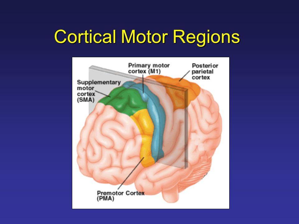 Cortical Motor Regions