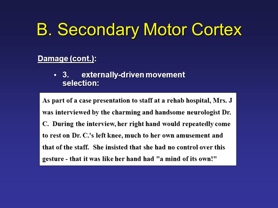 B. Secondary Motor Cortex 3.externally-driven movement selection: 3.externally-driven movement selection: As part of a case presentation to staff at a