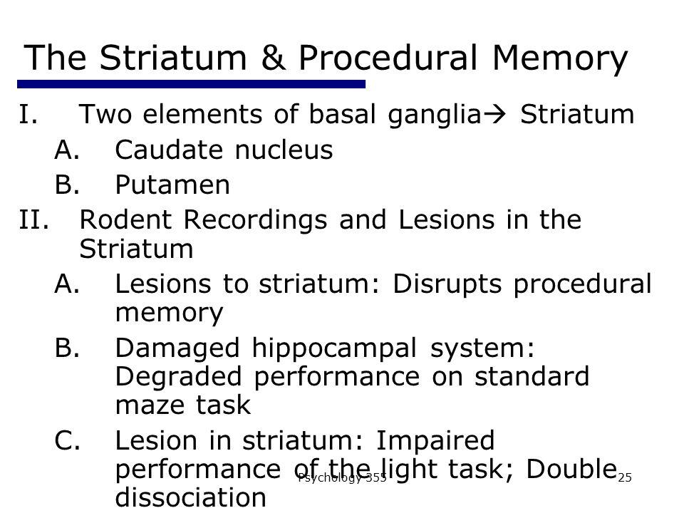 Psychology 35525 The Striatum & Procedural Memory I.Two elements of basal ganglia  Striatum A.Caudate nucleus B.Putamen II.Rodent Recordings and Lesi