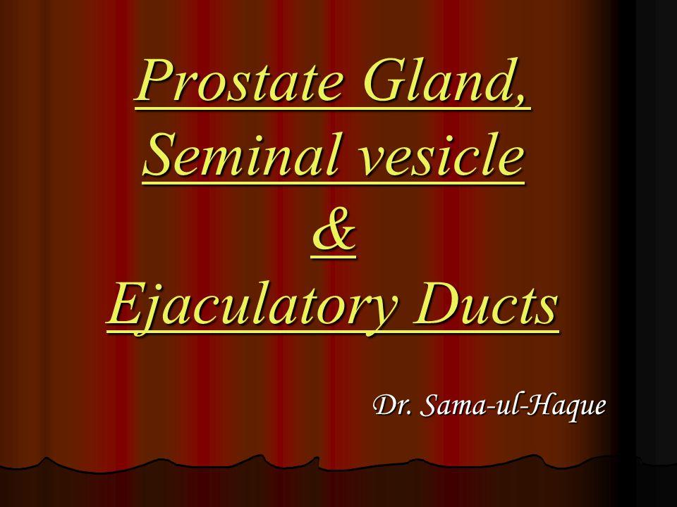 Prostate Gland, Seminal vesicle & Ejaculatory Ducts Dr. Sama-ul-Haque Dr. Sama-ul-Haque