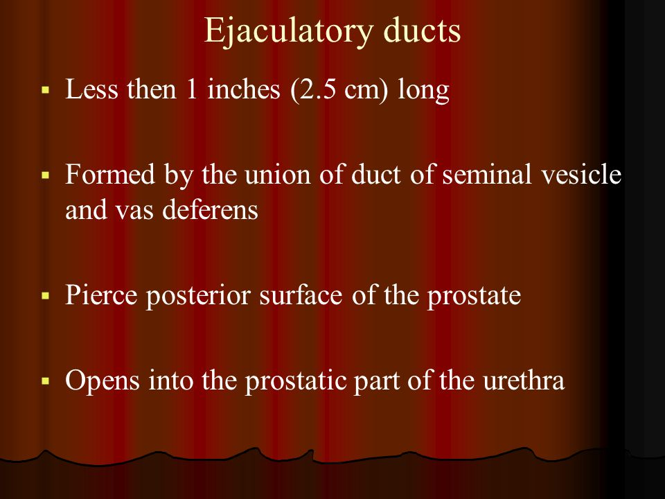 Ejaculatory ducts   Less then 1 inches (2.5 cm) long   Formed by the union of duct of seminal vesicle and vas deferens   Pierce posterior surfac